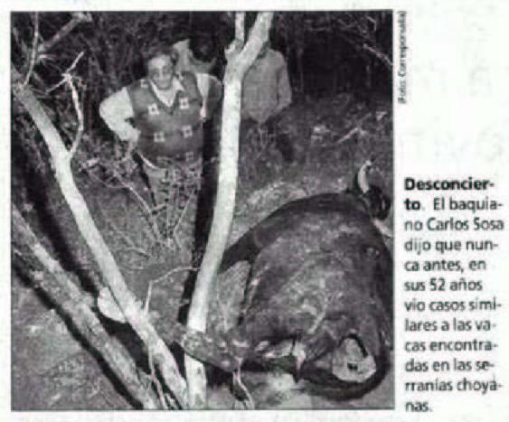 Mutilaciones de ganado en América del Sur (6/6)